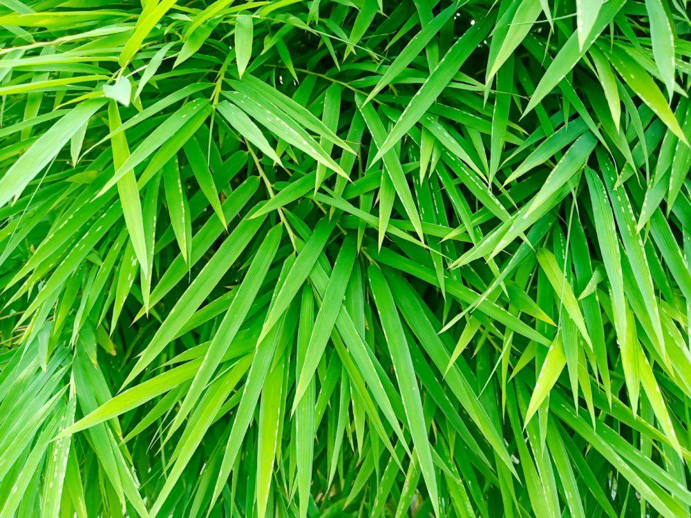 erba-piante-chakra